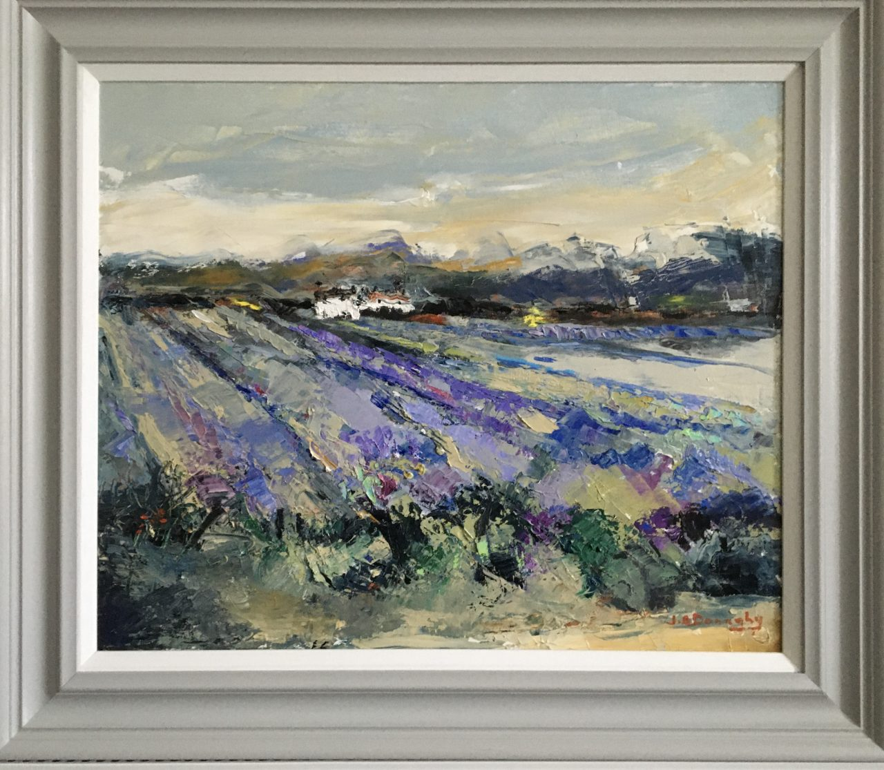 English Lavender Fields.